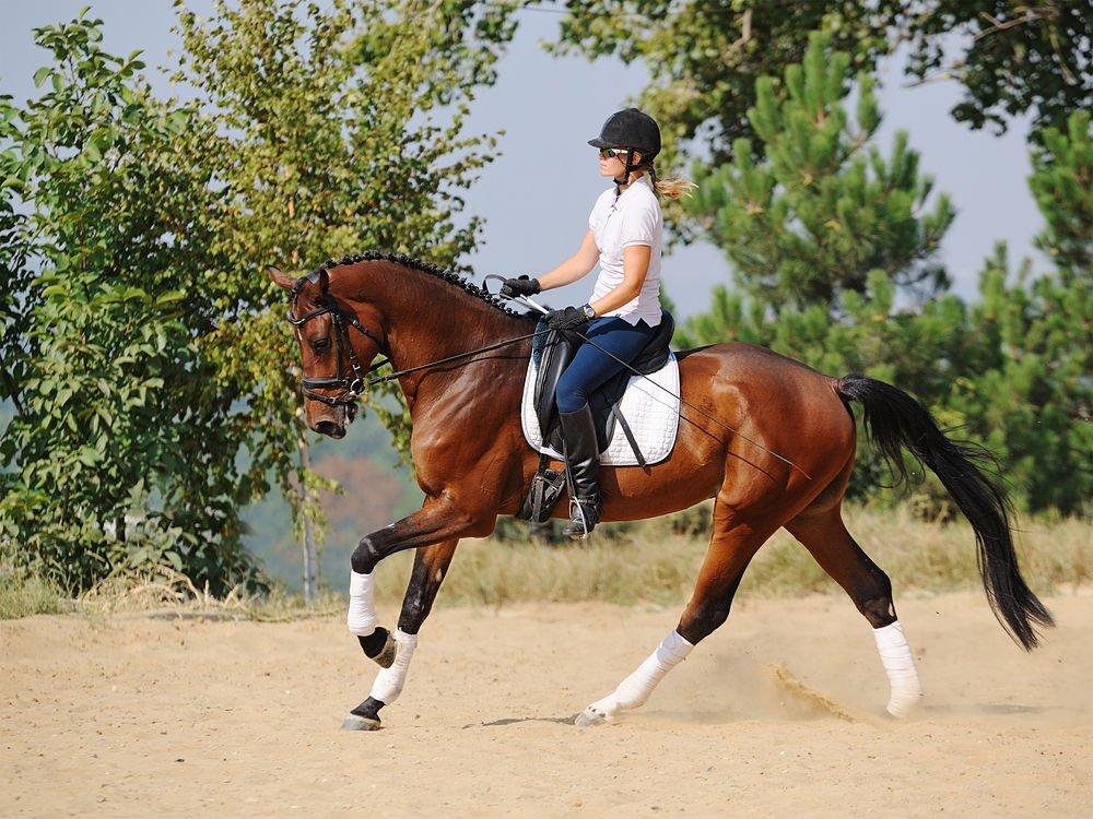 dar clases de equitacion en Valencia